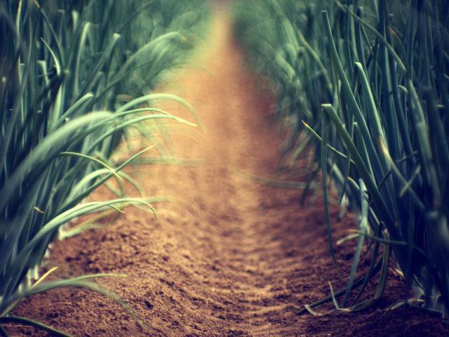 Hållbara matupplevelser