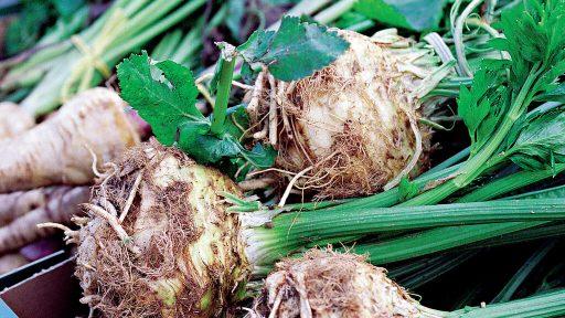 Recept: Rotsellerigryta med äpple & kål